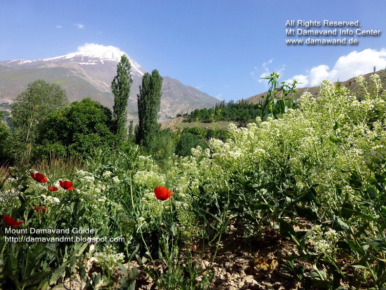 Damavand in Summer